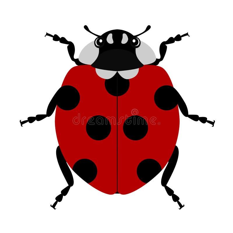 Ladybug in on white background. Ladybug isolated on white background vector illustration