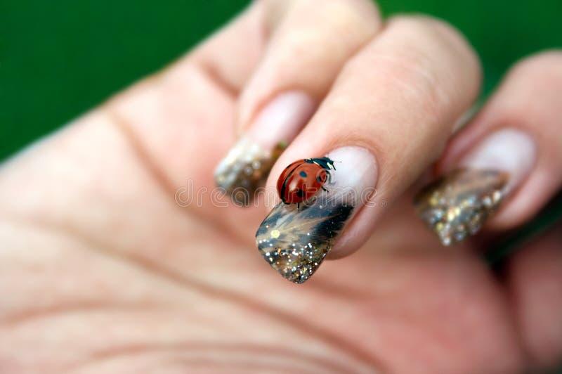 Ladybug on a woman's nail stock photos