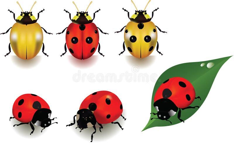 ladybugs бесплатная иллюстрация