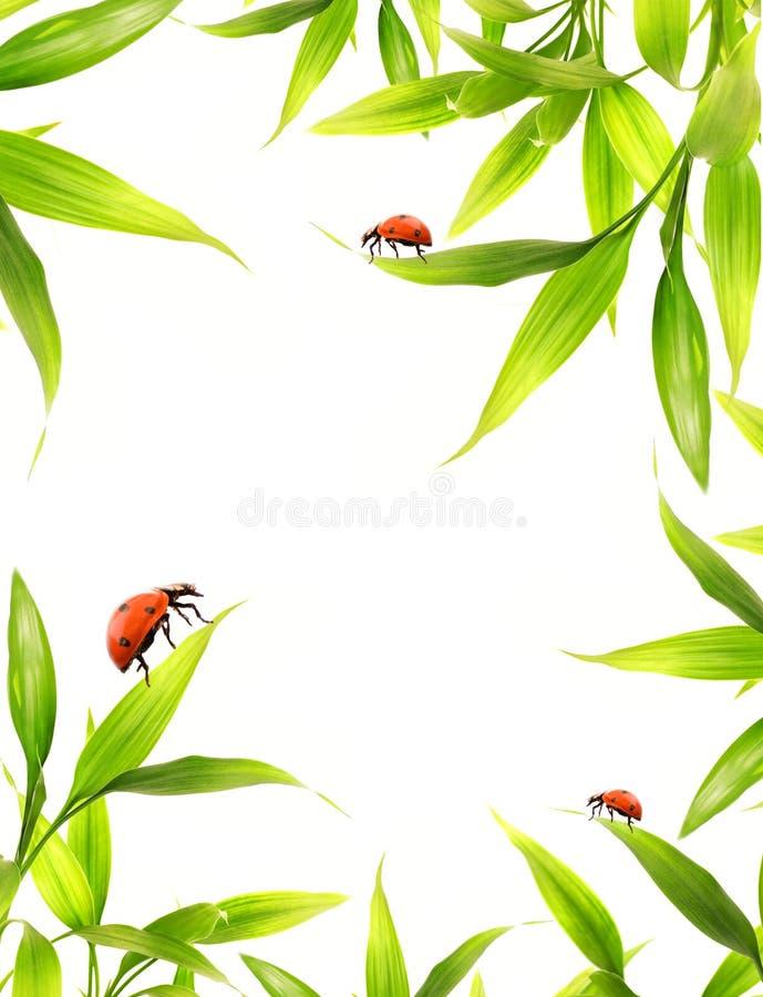 Ladybugs imagem de stock royalty free