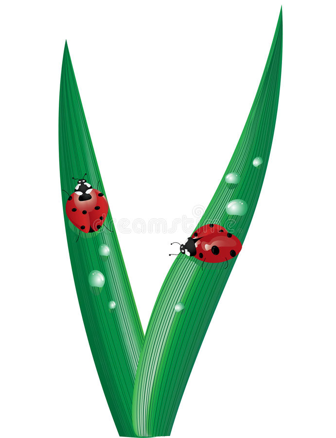 Ladybugs on blades of grass. Illustration of two cartoon ladybugs on blades of grass sprinkled with water drops vector illustration