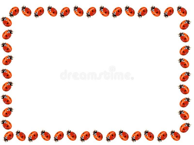 Ladybugs frame stock images