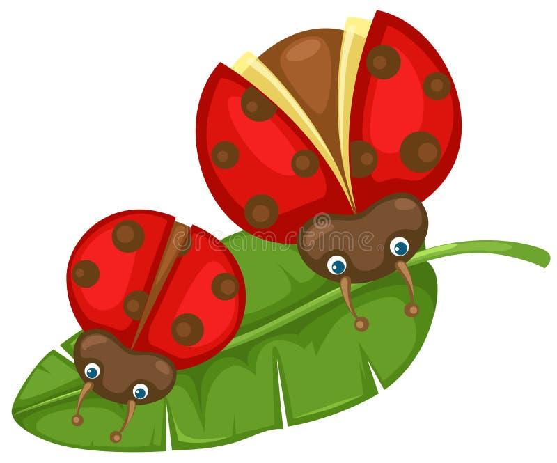 Ladybugs on the leaf vector illustration