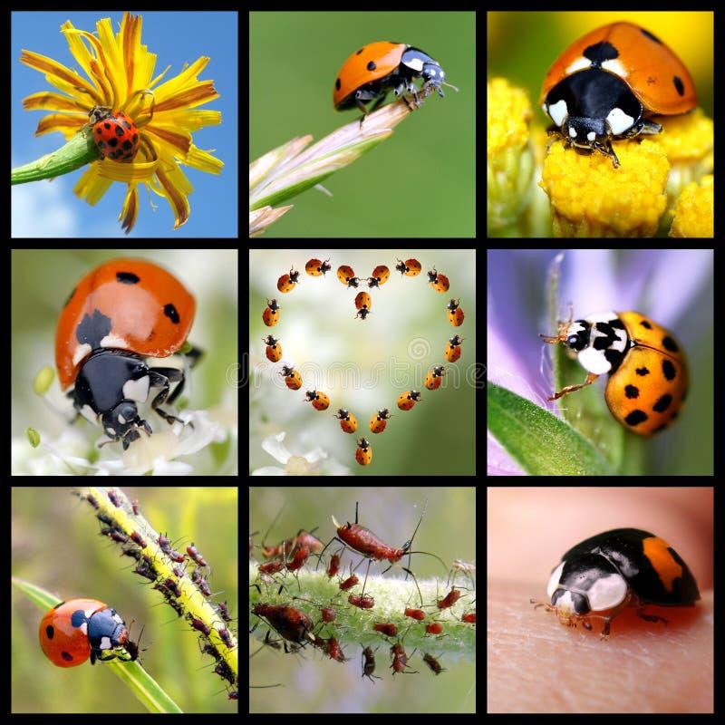Download Ladybugs mosaic stock photo. Image of antenna, orange - 5550862