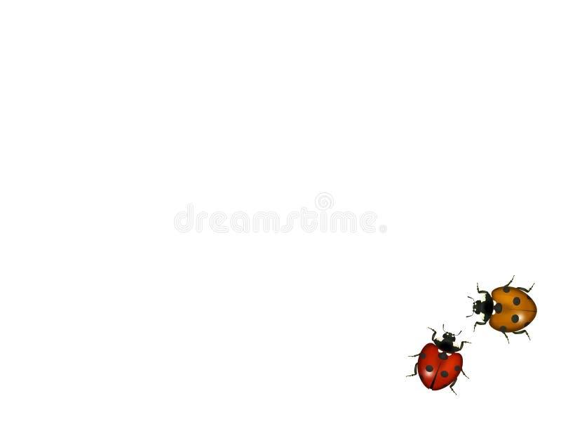 Ladybugs su priorità bassa bianca illustrazione vettoriale
