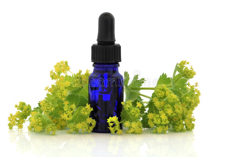 Ladys Mantle Herb. And flowers with aromatherapy essential oil glass bottle, over white background. Alchemilla mollis royalty free stock photography