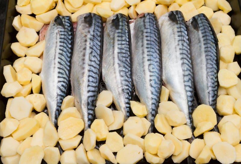 Laga mat fiskmakrillen på ett magasin i ugnen royaltyfri fotografi