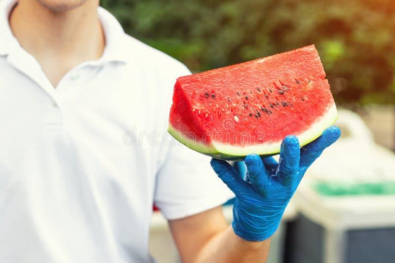 Laga mat i gummihandskar som rymmer i hand och erbjudande stort stycke av den nya smakliga saftiga skivade vattenmelon för hotell royaltyfria foton