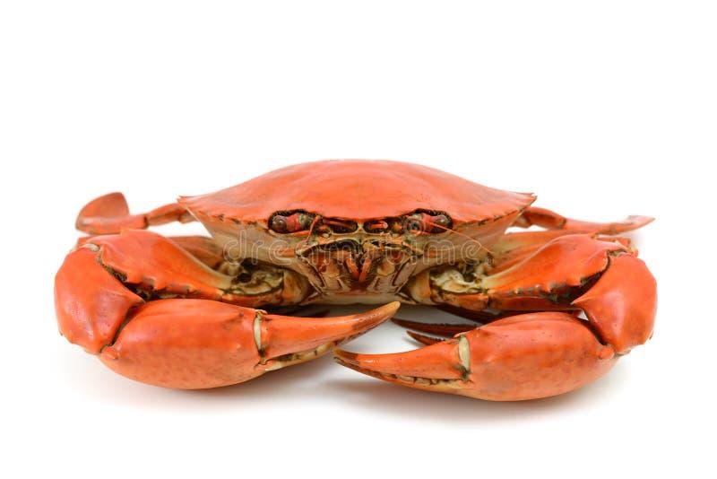 Lagad mat blå krabba royaltyfria foton