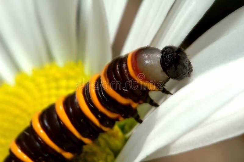 Download Lagarta e flor imagem de stock. Imagem de borboleta, wildlife - 533847