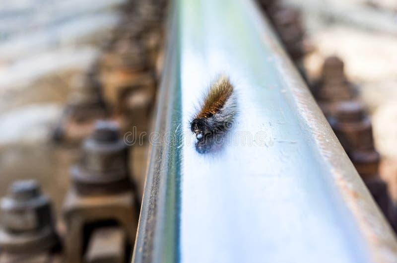 A lagarta rasteja ao longo do trilho Os cursos da lagarta imagens de stock royalty free