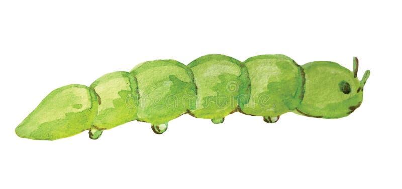 Lagarta verde em um fundo branco foto de stock