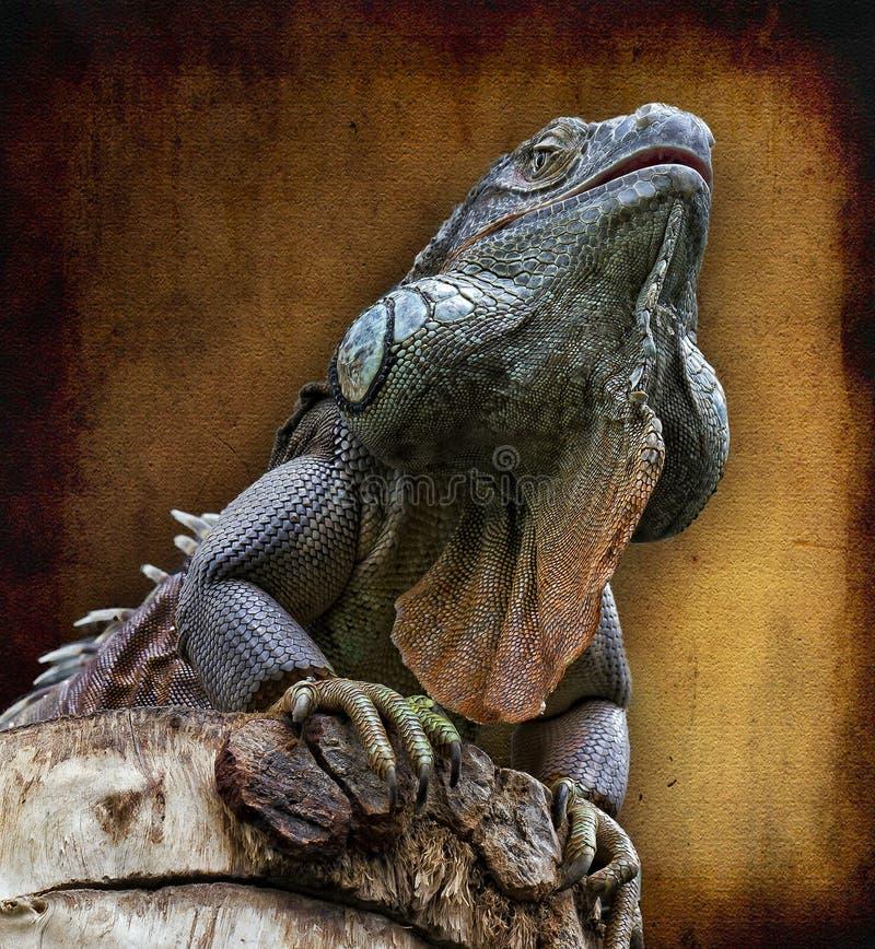 Download Lagartijo stock photo. Image of spine, scale, reptile - 19064550