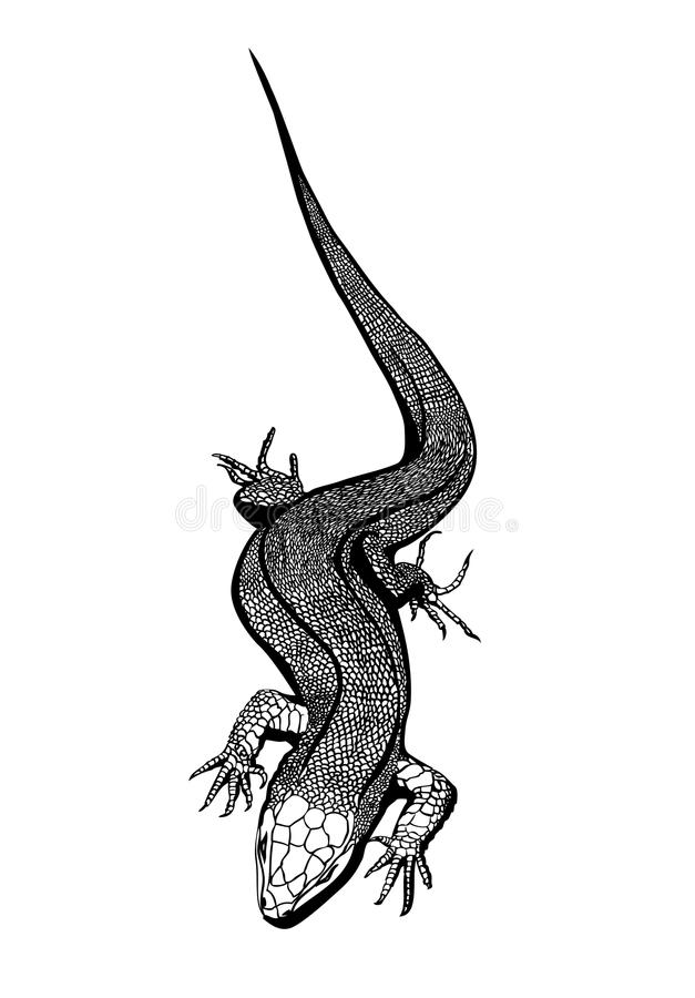 Lagarto ilustração royalty free