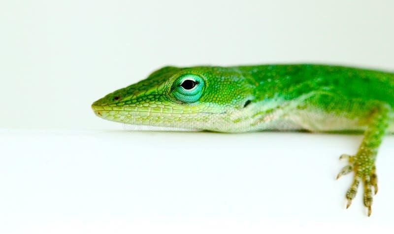 Download Lagarto foto de archivo. Imagen de verde, camaleón, boca - 78342