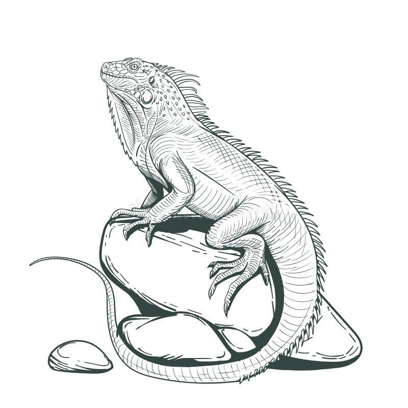Lagarto de la iguana en una página adulta de piedra del colorante ilustración del vector