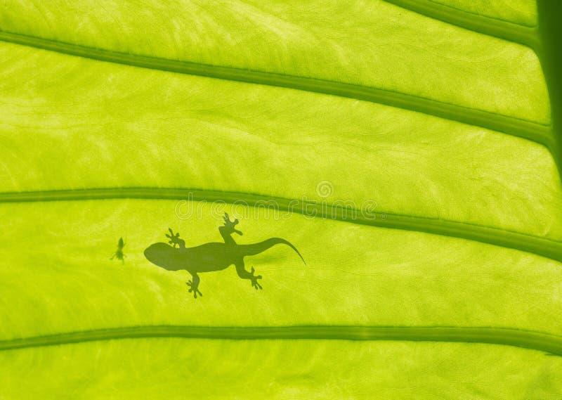 Lagarto do Gecko fotos de stock royalty free