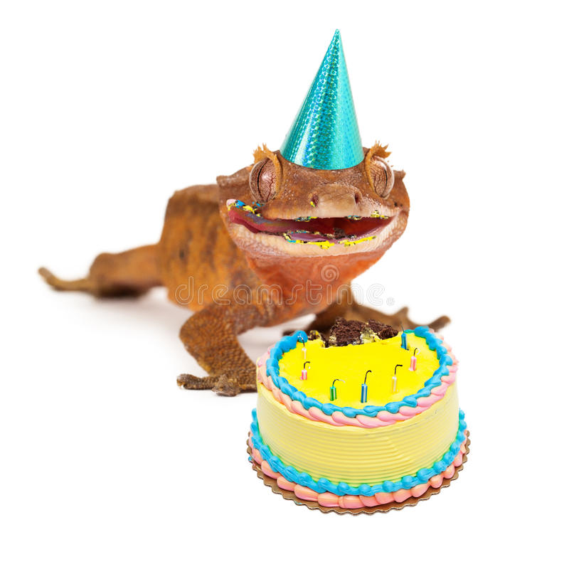 Lagarto engraçado do geco que come o bolo de aniversário imagem de stock royalty free