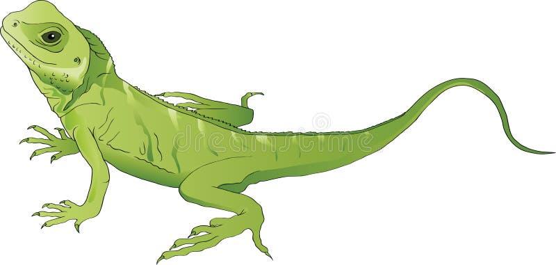 Lagarto verde ilustração do vetor