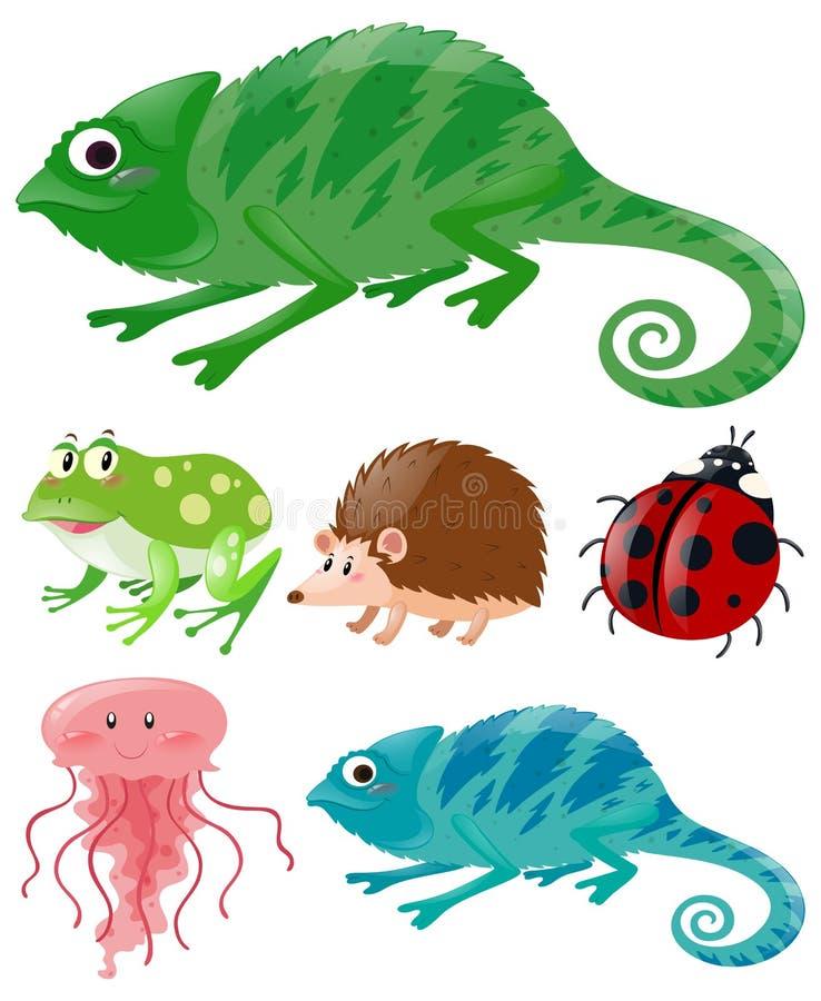 Lagarto y otros animales ilustración del vector
