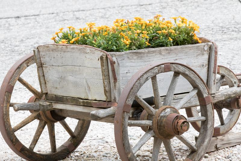 Wooden cart carries yellow mountain flowers stock photo