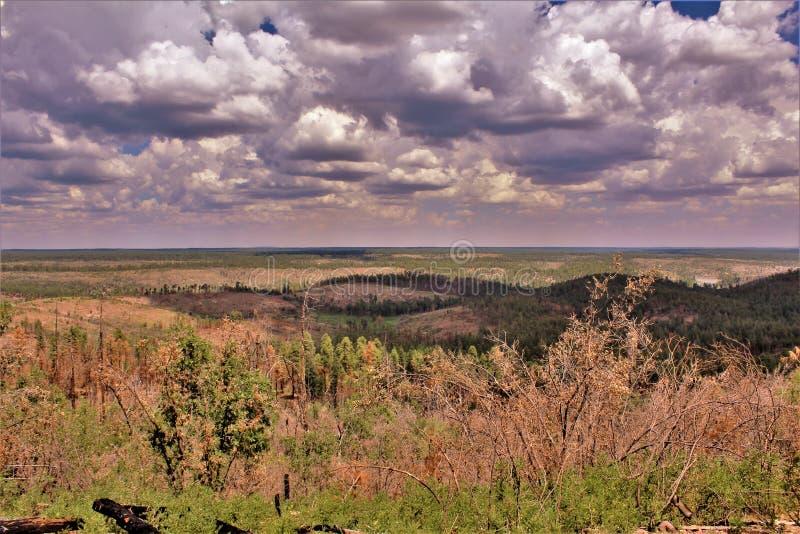 Lage adelvooruitzichten, het Nationale Bos van Apache Sitgreaves, Arizona, Verenigde Staten royalty-vrije stock foto