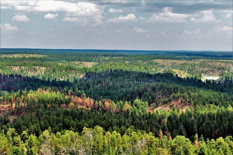 Lage adelvooruitzichten, het Nationale Bos van Apache Sitgreaves, Arizona, Verenigde Staten royalty-vrije stock foto's