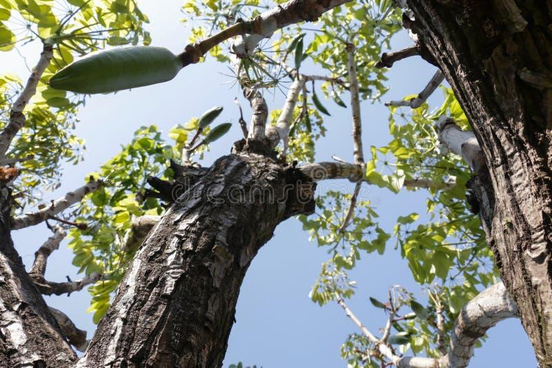 Lage die hoek van een boom in het bos wordt geschoten stock afbeeldingen