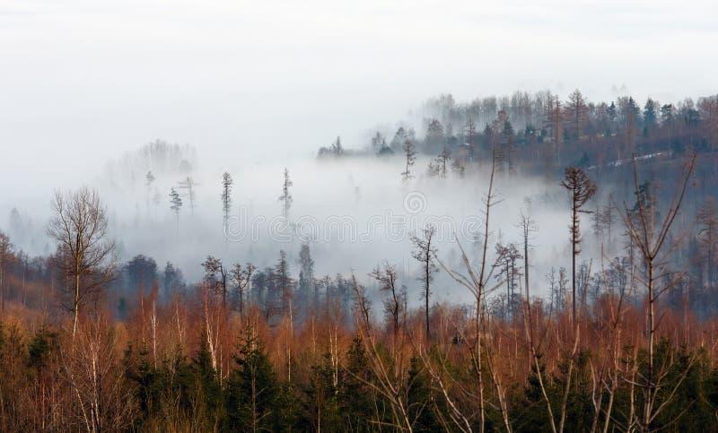Lage die wolk in de bovenkanten van bomen wordt geplakt stock fotografie