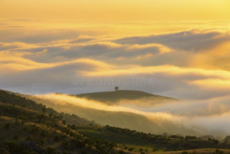 Lage gele wolken gekleurd bij zonsopgang royalty-vrije stock afbeeldingen