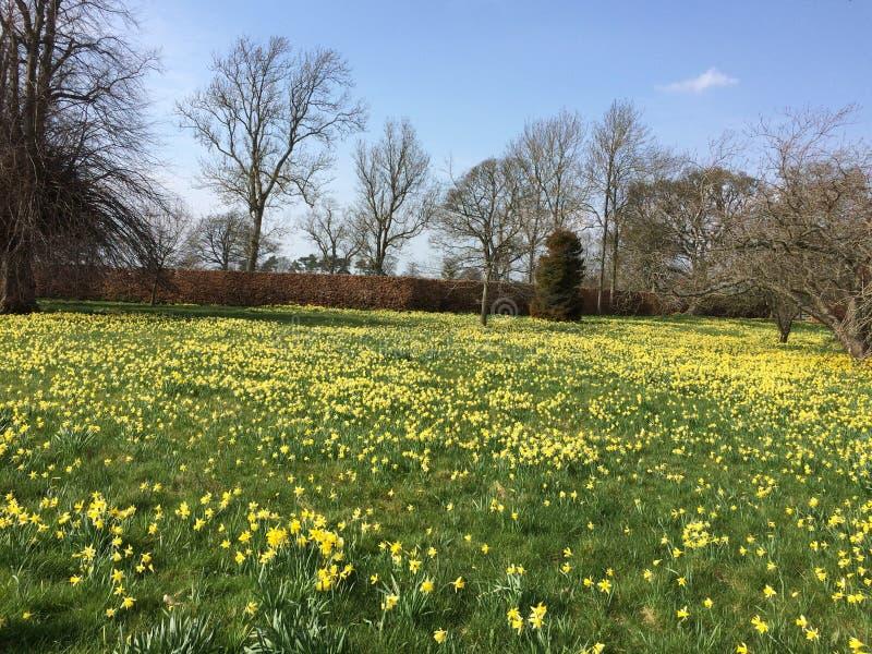 Lage hoek foto van een veld in zonnig VK stock foto's