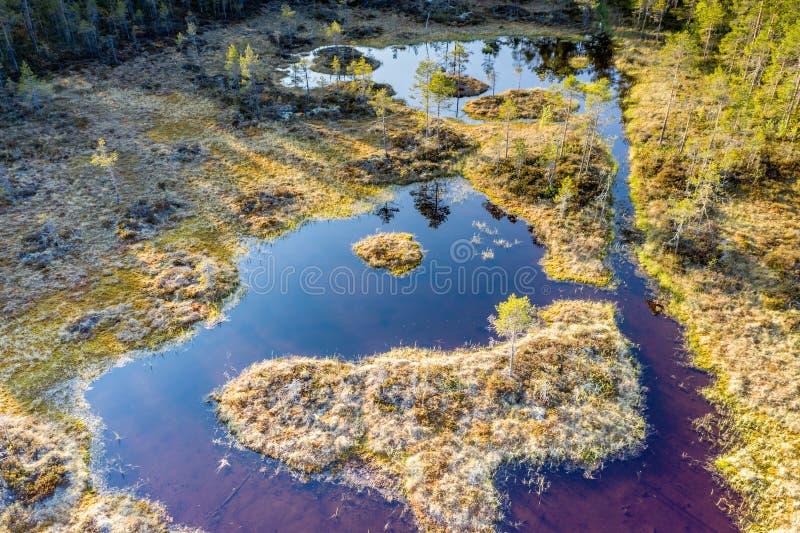 Lage luchtfoto van het gewone moeras in het Zweedse dennenbos Zondag, geen wind Noord-Zweden, Vasterbotten, Umea royalty-vrije stock foto