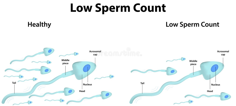 Lage Spermatelling vector illustratie
