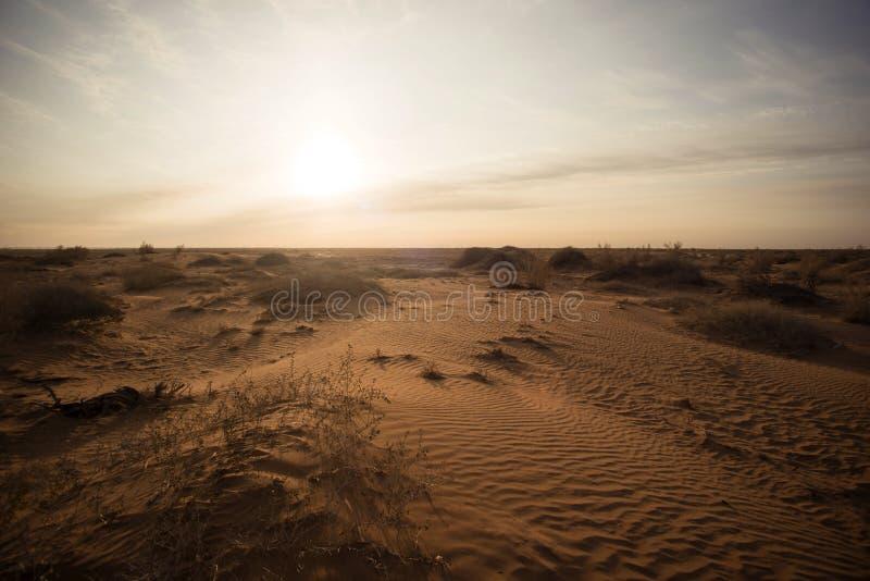 Lage struiken in dorre woestijn stock fotografie