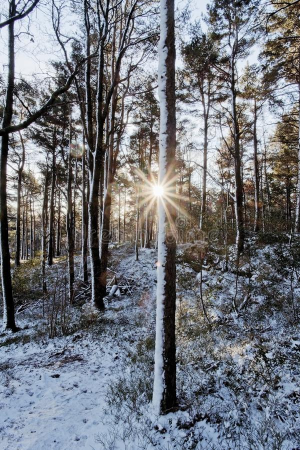 Lage zon die door de winterbos glanzen royalty-vrije stock fotografie