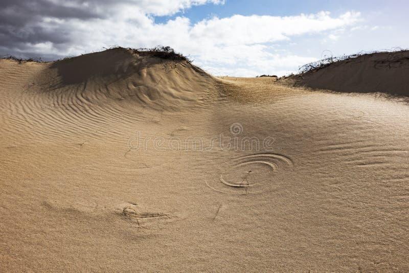 Lage zon recente middag, in het natuurreservaat, Corralejo, Fuerteventura, kanarie-Eilanden, Spanje royalty-vrije stock foto