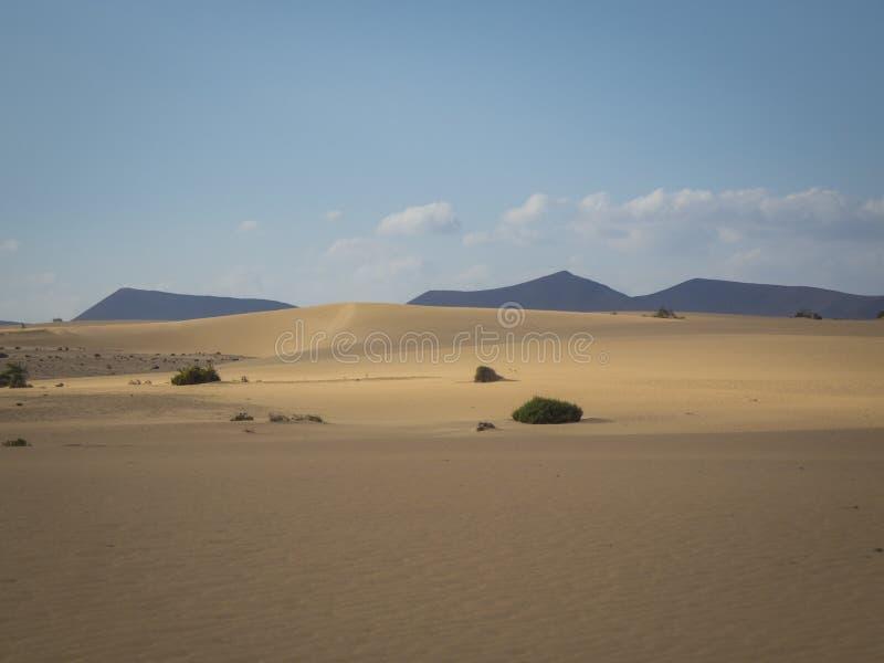 Lage zon recente middag, in het natuurreservaat, Corralejo, Fuerteventura, kanarie-Eilanden, Spanje royalty-vrije stock fotografie