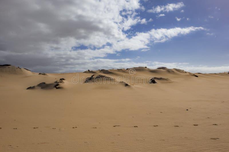 Lage zon recente middag, in het natuurreservaat, Corralejo, Fuerteventura, kanarie-Eilanden, Spanje stock fotografie