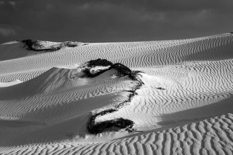 Lage zon recente middag, met zandpatronen en texturen in het natuurreservaat, Corralejo, Fuerteventura, Canarische Eilanden, Span stock afbeelding