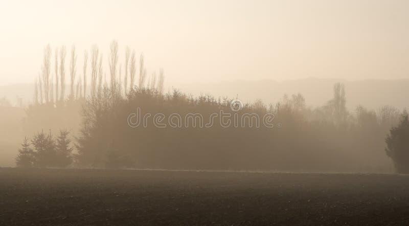Lagen bomen in de mist royalty-vrije stock afbeelding