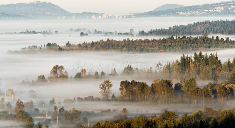 Lagen Bomen die door Misty Scene breken royalty-vrije stock afbeeldingen