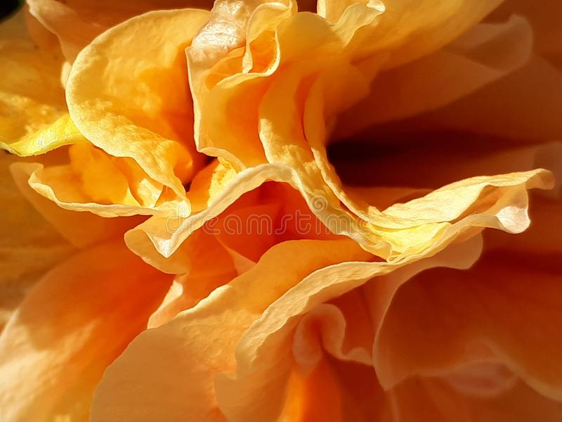Lagen van Sinaasappel royalty-vrije stock afbeeldingen