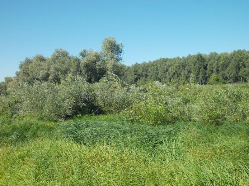 Lagen van vegetatie stock foto's