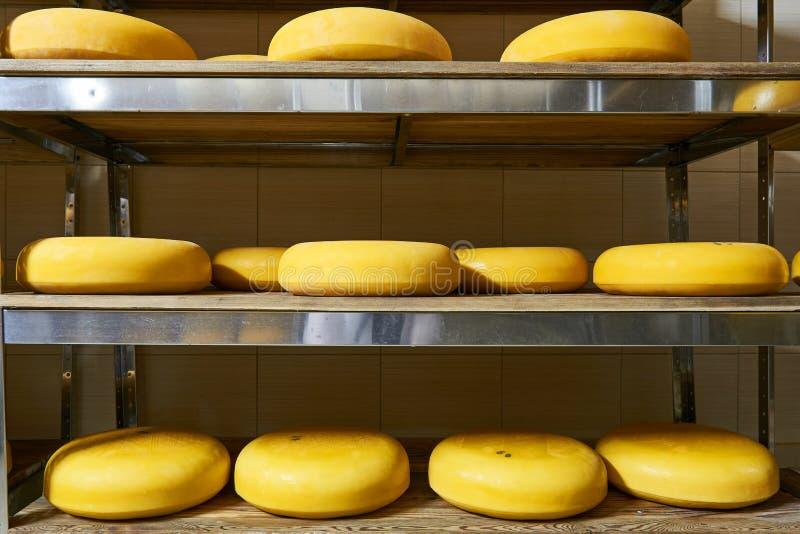 Lager för ostfabrik med hyllor av produkten arkivfoton
