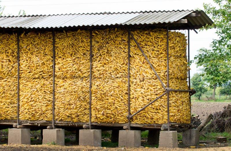 Lagerung für Maiskolben stockbild