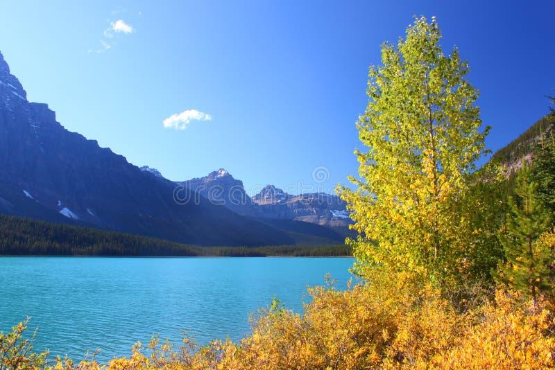 Laghi waterfowl nella sosta del Banff fotografia stock libera da diritti