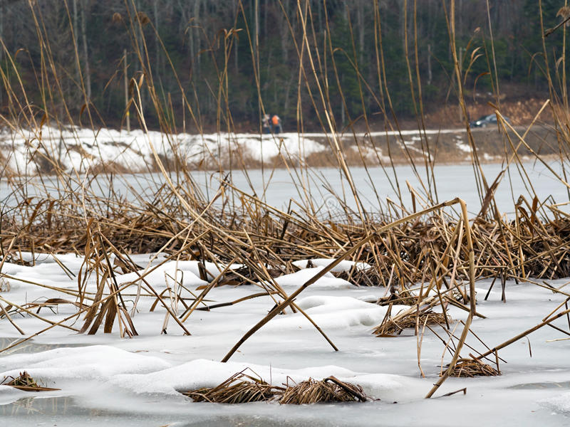 Lago Abant no inverno fotografia de stock royalty free
