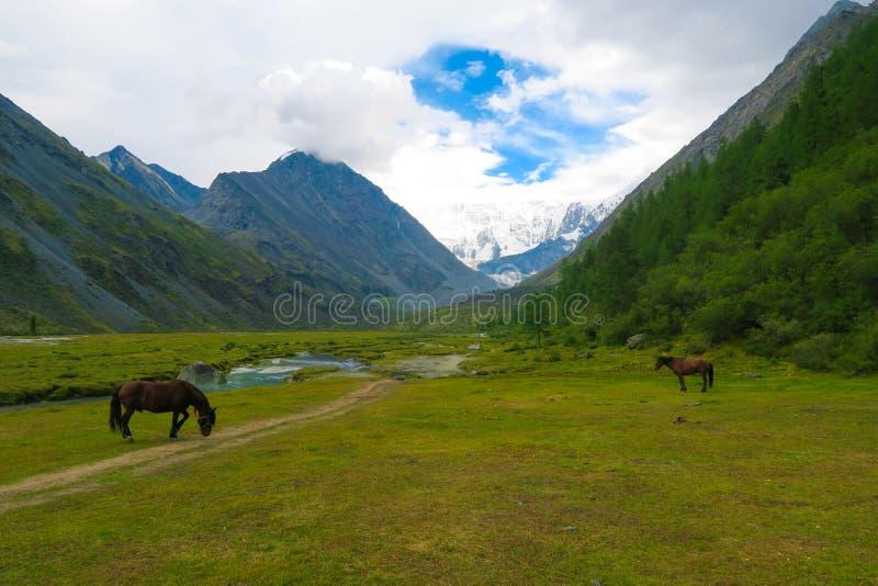 Lago Akkem Paisaje de las monta?as de Altai Caballos en el fondo fotografía de archivo