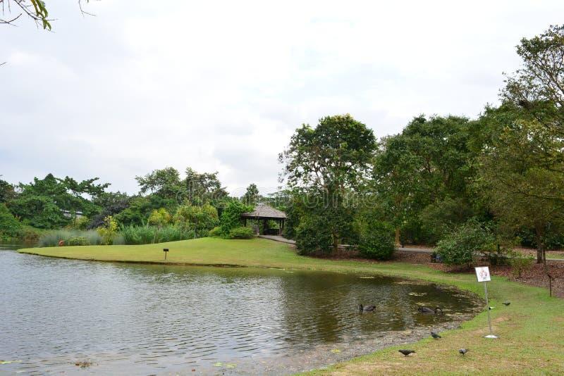 Lago al giardino botanico di Singapore fotografia stock libera da diritti