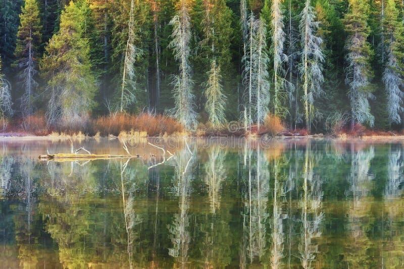 Lago alinhado floresta da montanha das madeiras foto de stock royalty free